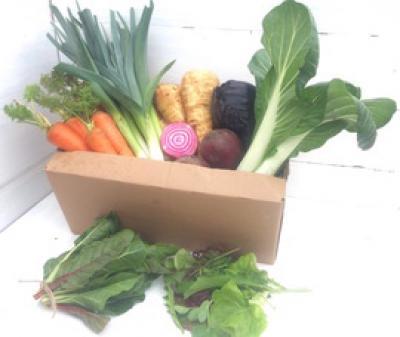 Picture of Organic Veg Box - Medium (no potatoes)