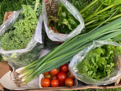 Picture of Organic Veg Box - Small (salads & greens)