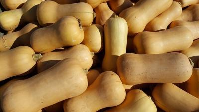Picture of Squash, butternut